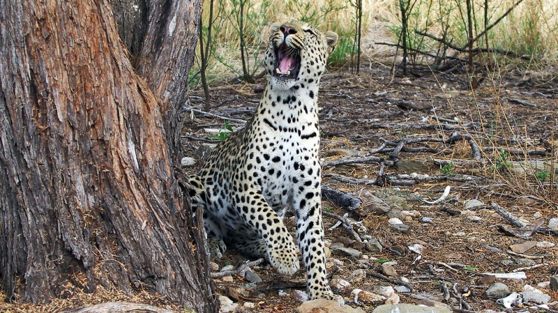 Jaguar05