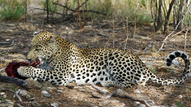 Jaguar07