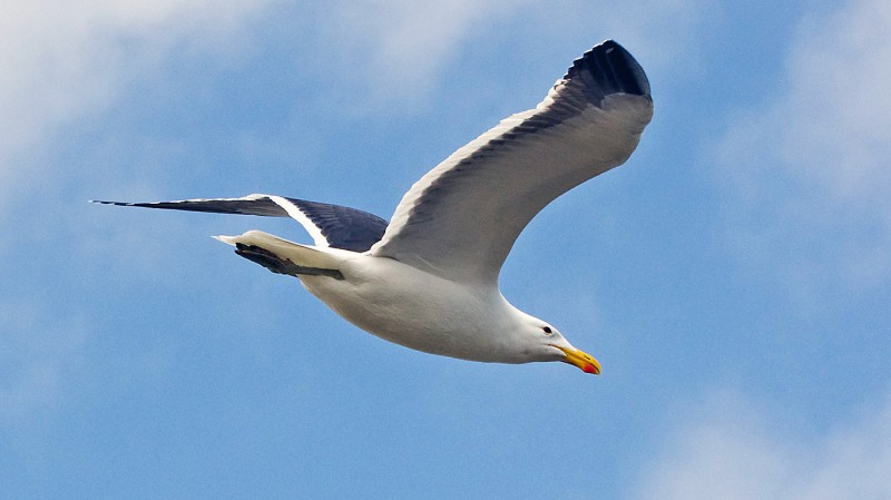 Birds17