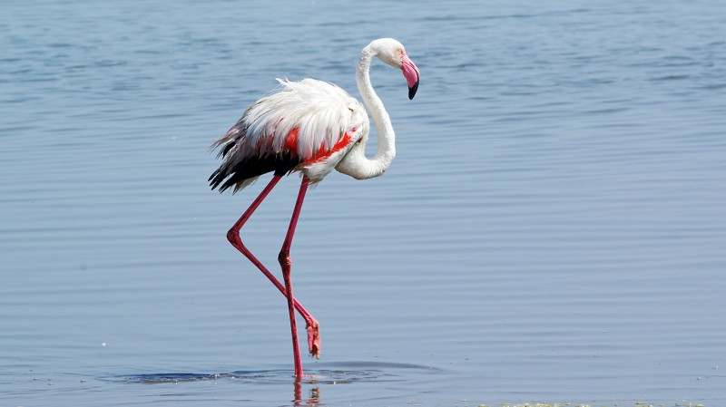 Flamingo04