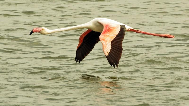 Flamingo07