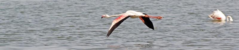 WB_Flamingo.jpg