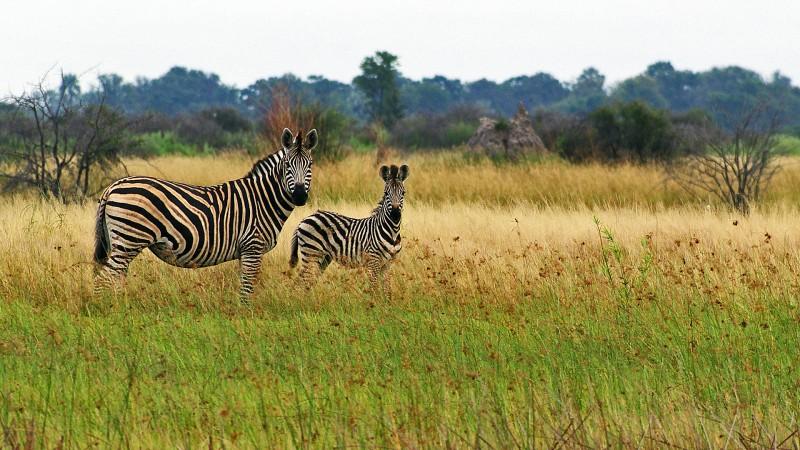 Botswana3a_08