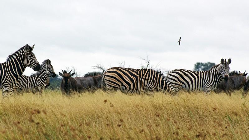 Botswana3a_09