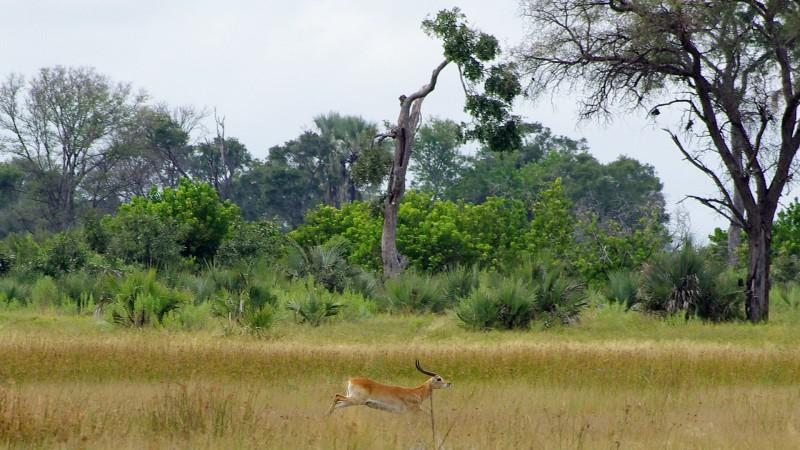 Botswana3a_15