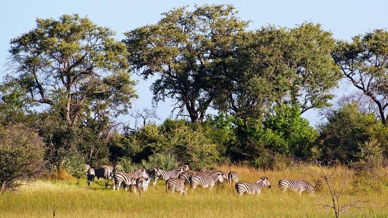 Botswana4a_08