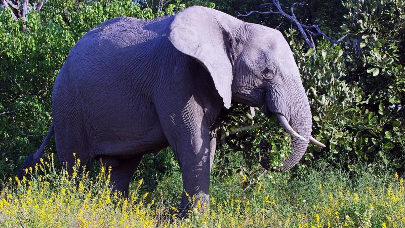 Botswana5_08