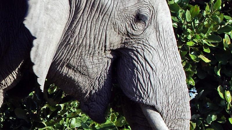 Botswana5_09