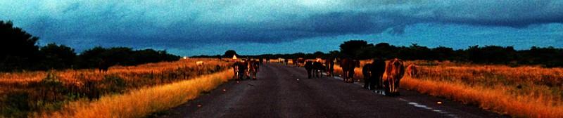 Botswana8-1.jpg