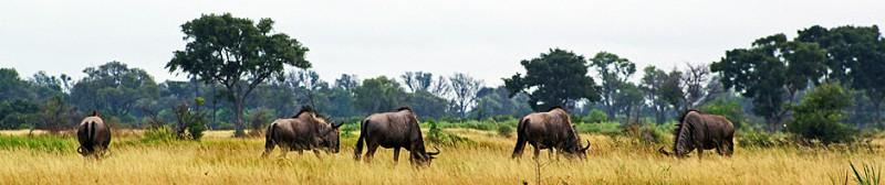 Botswana8-3a.jpg