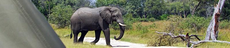 Botswana8-7b.jpg