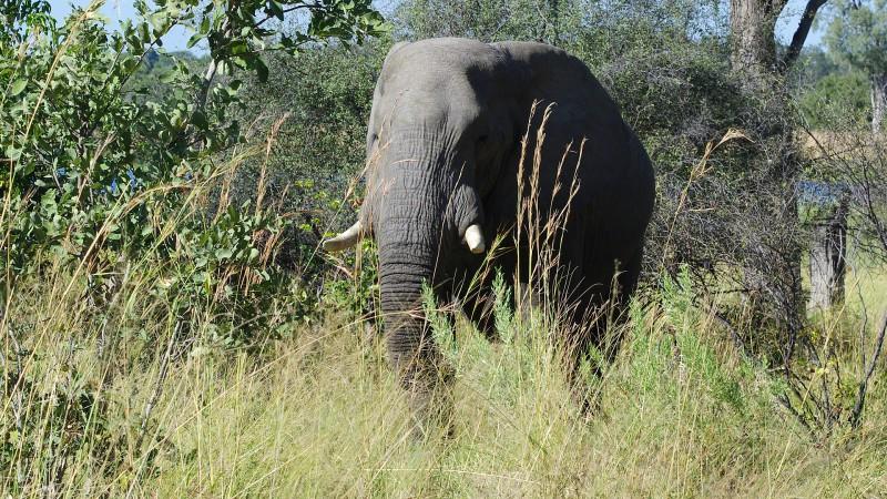 Botswana8_04